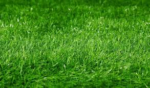 grass field background. Green Football Field Grass Background. Selective Focus At The Center. | Stock Photo Colourbox Background