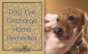 simple dog eye discharge home remes