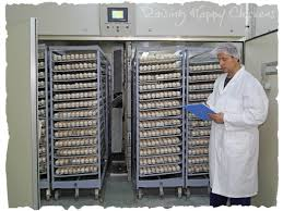 Image result for DIFFERENT TERM USED FOR INCUBATOR