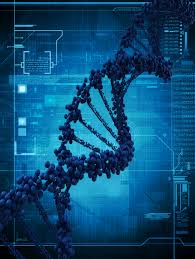 gattaca essay genetic engineering  gattaca essays and papers