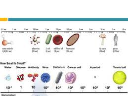 12 Hand Picked Microorganism Size Chart