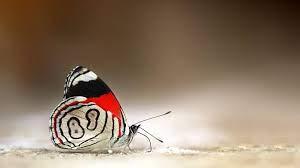 Pc Hd Wallpaper Butterfly - 2048x1152 ...