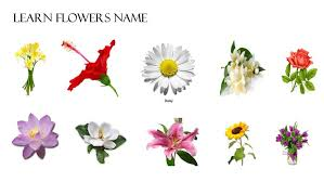 names of all flowers names of flowers flower meaning