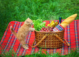 Image result for cats and picnic