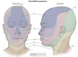 Dermatomal Pattern Interesting Anatomy Dermatomes Of The Face Image