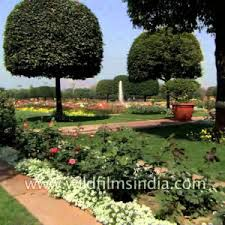 Small Picture Cute Garden Design In India Cool Lawn U Garden Garden Design