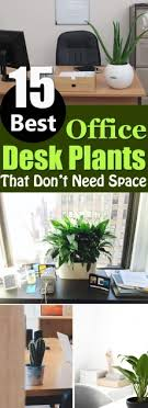 stunning feng shui workplace design. Related: Stunning Best Plant For Office Desk Feng Shui Ideas  Plants Stunning Feng Shui Workplace Design
