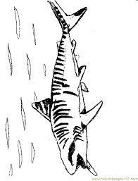 Small Picture Tigershark2 Coloring Page Free Shark Coloring Pages