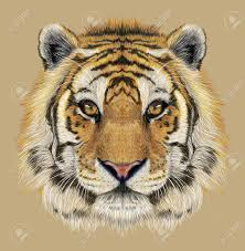 Tigre Dessin Banque D Images Vecteurs Et Illustrations Libres De