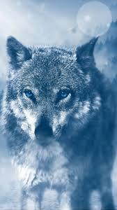 750x1334 Blue Eyed Wolf iPhone 6 ...