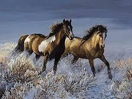 horse pics in the wild google search wild horses runningbeautiful