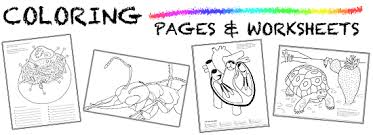 Small Picture Biology Coloring Pages Worksheets ASU Ask A Biologist