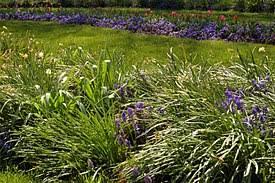 flower gardens pictures. Flower Garden Gardens Pictures