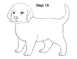 Small Picture How To Draw Puppy Dog Af2f9549e59969ada32f0ca98a2bf37djpg