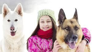 Canine Lymphoma Prednisone Canine Lymphoma