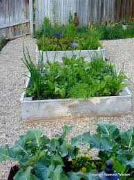 Ornamental Kitchen Garden Cool Season Veggies To Harvest Now