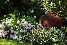 Small Picture Plant Combination Ideas Plant Family Hydrangeas