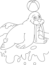 Small Picture Ball on walrus terrace coloring pages Download Free Ball on