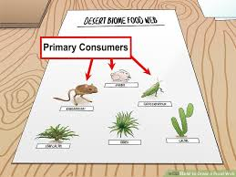 Producer And Consumer Venn Diagram How To Draw A Food Web With Pictures Wikihow