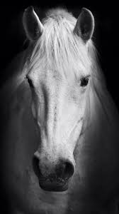 horses wallpaper black and white. Contemporary Wallpaper Horse Wallpaper Throughout Horses Wallpaper Black And White S