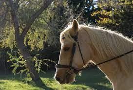 spanish horse names lovetoknow