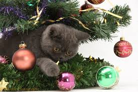 Grey Christmas Tree Grey Kitten Playing With A Christmas Tree Photo Wp18224