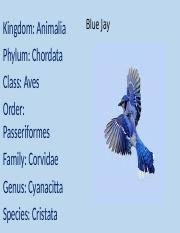 Blue Jay Robin Cardinal Finch And Pelican Taxonomy Chart 06 01 Classification Of Living Organisms Docx Taxonomy