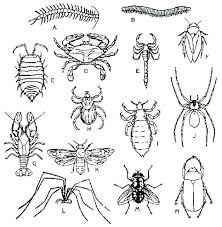 insect lesson plans for kindergarten free coloring pages insect coloring pages garden bug coloring pages insect