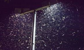 Do Led Lights Attract Less Bugs Leds Attract 50 More Insects And Could Damage Ecosystems