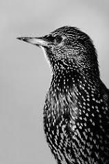Скачать реферат на тему птицы Официальный сайт Скачать реферат на тему птицы Скачать реферат на тему птицы
