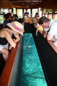 san marcos tx glass bottom boat not much marine life to see but a neat experience none the less