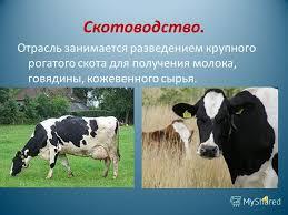 Презентация на тему Тема Животноводство в нашем крае  3 Животноводство