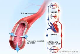 Blood Pressure Diagram Blood Pressure Picture Image On Medicinenet Com