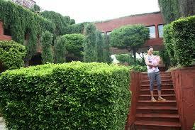ITC Mughal, Agra: Nice landscaping n greenery