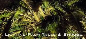 landscape lighting trees. Modren Trees Lightingpalms550 In Landscape Lighting Trees