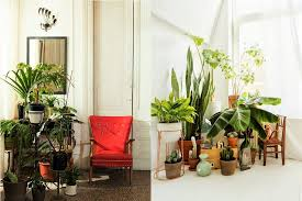 plants decoration ideas at home