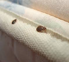 20+ Bed Bug Specialist PNG