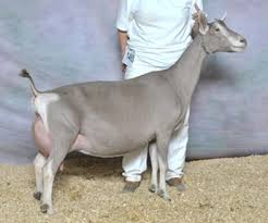 Breeds Of Goats Sale Creek Veterinary Services