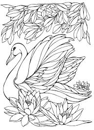 Small Picture 500 best Birds Insects etc Coloring Pages images on Pinterest