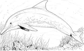 Small Picture Dolphin Coloring Pages