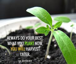 Garden Quotes Extraordinary Best Garden Quotes And Inspirational Gardening Sayings