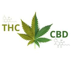 hemp versis marijuana