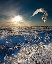 154 Best <b>owls</b> images   <b>Owl</b>, <b>Beautiful owl</b>, <b>Birds</b>