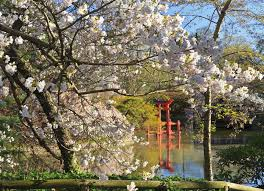 shinto shrine in spring