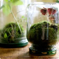 there are lots of tutorials for terrariums floating around these days but this one the terrarium turned on it s head inspired by a pickle jar terrarium