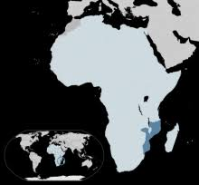 Resultado de imagem para Mozambican National Atomic Energy Agency