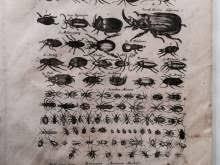 Stampe Antiche Cucina : Stampe antiche annunci sicilia kijiji di