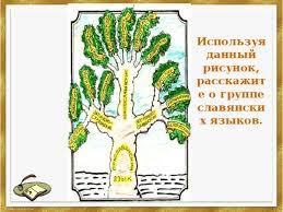 Презентация на тему Русский язык в семье славянских языков  Используя данный рисунок расскажите о группе славянских языков