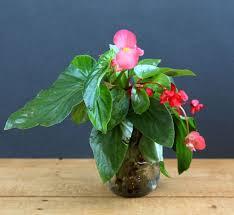 grow indoor plants in glass bottles apieceofrainbow 6