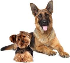 Hunde durchfall behandeln